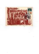 Carte Postale Fhilatélique - Reboisement De La Sologne 17/10/1965 - Dhuizon (Loir Et Cher) - Non Classés