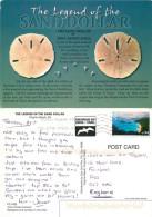 Sand Dollar, Virginia Beach, Virginia, United States US Postcard Posted 2008 Stamp - Virginia Beach