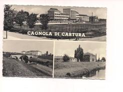 M3856 VENETO CAGNOLA DI CARTURA PADOVA 1957 VIAGGIATA - Other Cities