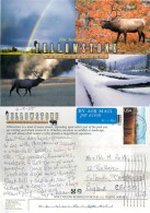 Yellowstone National Park, Wyoming, United States US Postcard Posted 2005 Stamp - Yellowstone