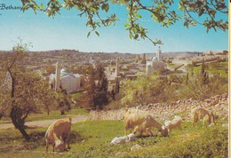 ISRAEL---BETHANY--près De Jerusalem---voir 2 Scans - Israel