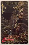 Rain Forest - St. Kitts & Nevis