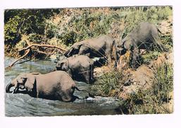 Olifanten - Elephants - Éléphants