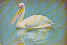 ZAMBIA - Pelican 1981 - Zambia