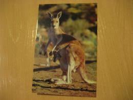 KANGAROO KANGOUROU MARSUPIAL Mammals Postal Stationery Card Australia - Sonstige