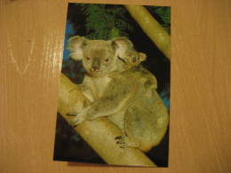 KOALA MARSUPIAL Mammals Postal Stationery Card Australia - Sonstige