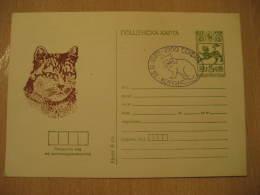 CAT CATS 1989 Postal Stationery Card Bulgaria - Domestic Cats