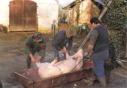 40 Landes (Montfort En Chalosse) NOUSSE  Tuaille Du Cochon Chez BERLON  * PRIX FIXE - Montfort En Chalosse
