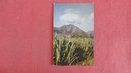 - Hawaii >   Sugar Cane Fiels   =======ref 2413 - Autres