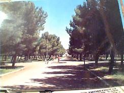 FOGGIA TORREMAGGIORE PINETA.  VB1978 FV8629 - Foggia
