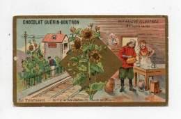 Chromo - Chicorée Guérin Boutron - Botanique Illustré - Le Tournesol - Guérin-Boutron