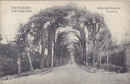Sint Truiden Saint Trond -  Tichelrij - Allée Des Soupirs (PhoB, Edit. Joséphine Van West) - Sint-Truiden