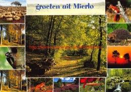 Groeten Uit Mierlo - Geldrop