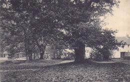 Genk Genck - Chêne Séculaire (Maison Stulens, 1910) - Genk