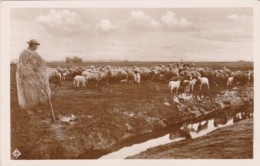 Hungary Budapest Sheep Herder With His Flock Real Photo