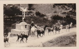 Bolivia La Paz A Wayside Shrine With Llama Pack Train Real Photo - Bolivia