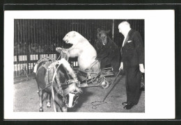 CPA Circus Willy Hagenbeck, Original-Raubtier-Dressurschau, Dompteur Avec Polar- Et Braunbär - Circus