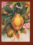 1 Cp Illustrateur - Les Fruits De France  - Les Coings - 1942 - Illustrateurs & Photographes