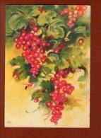 1 Cp Illustrateur - Les Fruits De France  - Les Groseilles  - 1942 - Illustrateurs & Photographes