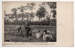Jardins Ouvriers De Roubaix : Récolte Pommes De Terre - Roubaix
