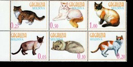 Moldova Gagauzia Katzen Postfrisch MNH *** - Moldawien (Moldau)