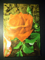 90 FLOR FLOWER FLEUR ROSA PINK ROSE POSTCARD POSTAL AÑOS 70 ESCRITA - TENGO MAS POSTALES - Flores