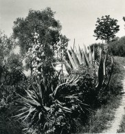 Italie Lac De Côme Bellagio Villa Serbelloni Jardins Ancienne Photo Stereo Wehrli 1900 - Stereoscopic