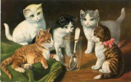 CHAT - Katten