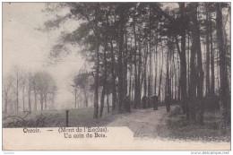 Cpa Orroir - Mont De L´Enclus - Un Coin Du Bois - Kluisbergen