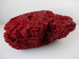 - Corail Orgue Rouge Tubipora Musica - - Minéraux & Fossiles