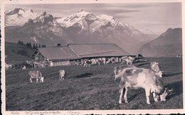 Windspillenalp, Chalet D'alpage Et Troupeau à 1800m (2128) - BE Berne