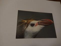 Tete De Royal Penguin - Animaux & Faune