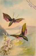 Illustrateur - Signée Linette - Aquarelle - Papillons - Acquarelli