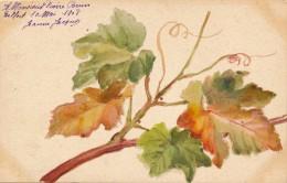 Illustrateur - Signée Jeanne Jacquos - Gouache - Feuilles De Vigne - Daté 1908 - Aquarelles