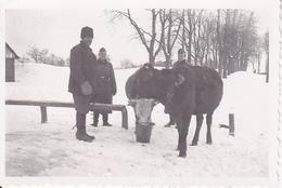 Foto Deutsche Soldaten Mit Bauer Und Kuh - Winter - 2. WK - 8*5cm (25994) - Krieg, Militär