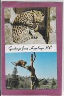 GREETINGS FROM KAMLOOPS, B.C. - Monkeys