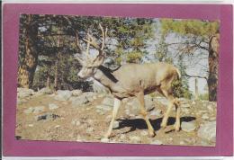 B.C. WILDLIFE PARK ... KAMLOOPS BRITISCH COLUMBIA - Animals