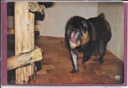 25.- BESANCON .- Le Zoo De La Citadelle  Singe En Mandrills - Affen