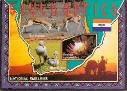 National Emblems Of South  Africa Mehrbildkarte - Südafrika