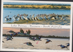 Grote Kaart Lake Bonney Barmera South Australia Pelican Pelikaan Stamp Postzegel Koala - Australia