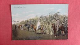 Growing Sugar Cane --ref 2429 - Landbouwers