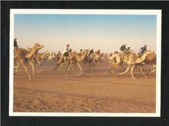 Saudi Arabia Picture Postcard El Ganaderia Camel Race Riyadh View Card - Saudi Arabia