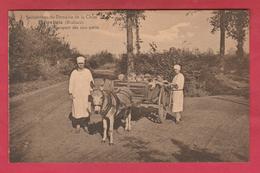 Pietrebais -Sanatorium Du Domaine De La Chise -Tout-petits Transportés Par Une Charrette Tirée Par Un âne ( Voir Verso ) - Incourt