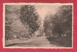 Hautfays-  Route De Wellin ( Voir Verso ) - Daverdisse