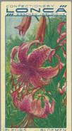 Ancien Chromo Confectionery Lonca Esschen N° 14 Lis Brillant Lelie - Autres