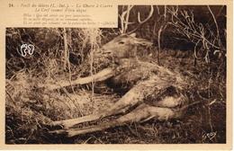 Foret Du Gavre - La Chasse à Courre - Le Cerf Venant D'etre Dagué - Le Gavre