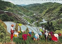 PHILIPPINES--the Eighth Wonder Of The World---voir 2 Scans - Philippines