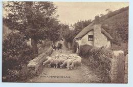 Lynton ? - A Devonshire Lane. - Photochrom Sepiatone - Lynmouth & Lynton