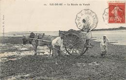ÎLE DE RE - La Récolte Du Varech. - Ile De Ré