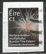 Irlanda 2014 - Fireworks Anemone (Pachycerianthus Multiplicatus) Animali Coralli E Spugne (su Frammento) - Usati